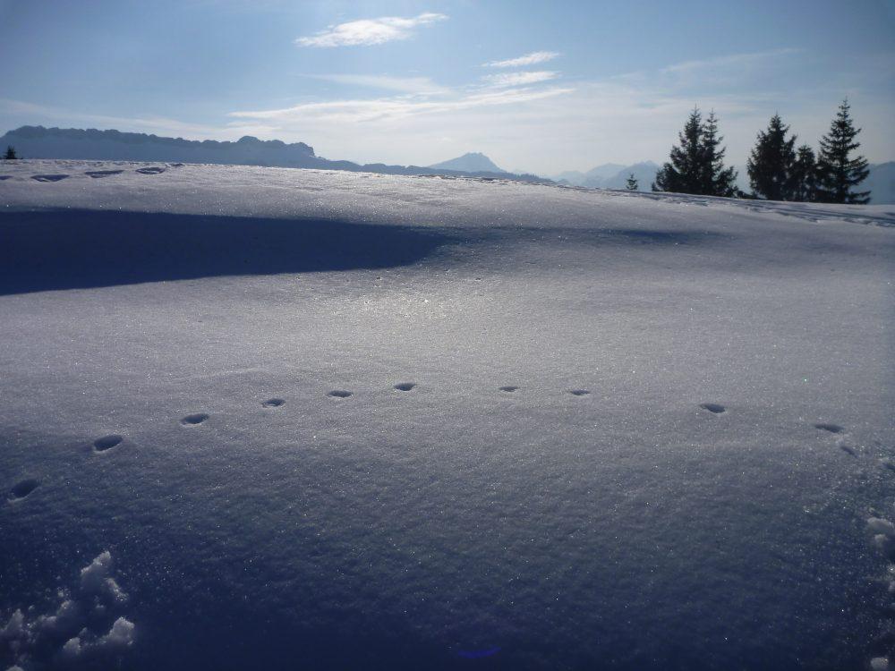 Schneeschuh-Tracking